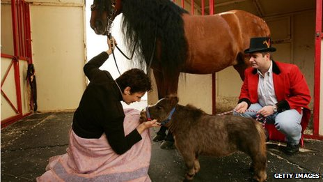 World's smallest horse, 2006