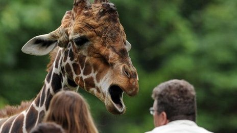 [Image: _68166718_giraffe_afp.jpg]