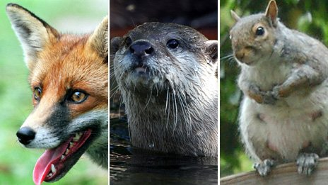 Fox, otter, squirel