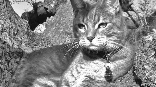 Nimbus the cat