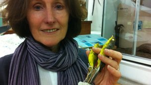 Prof Pat Monaghan and two yellow birds