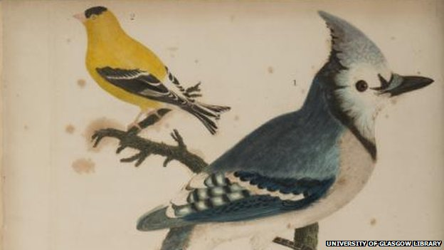 Big blue jay and small yellow bird courtesy of University of Glasgow Library