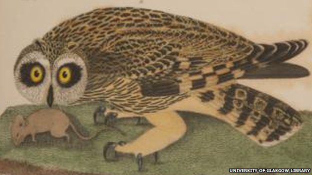 Owl and mouse courtesy of University of Glasgow Library