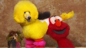 Dog groomed to look like Big Bird and Elmo