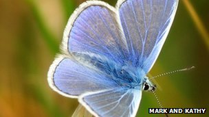 Common blue (c) Mark and Kathy