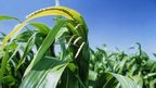 Government leads new GM crops push