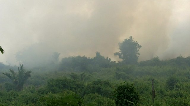 Forest fire in Sumatra