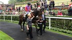 Ryan Moore and Estimate in the parade ring