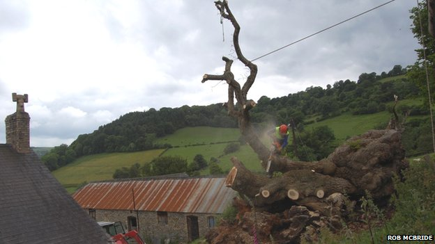The tree was pulled off the house on which it had been lying for more than two months