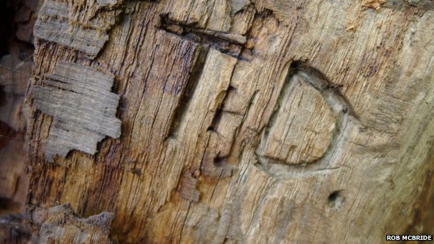 Some interesting wood carvings were found as the team dismantled the Pontfadog Oak