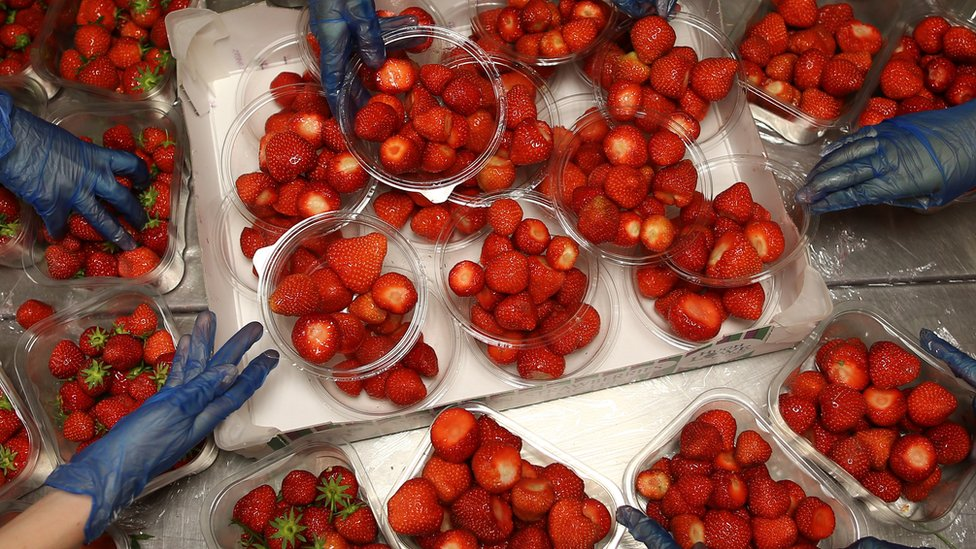 Strawberries and cream are almost as popular as the tennis at Wimbledon! Last year it's estimated around 28,000kg of the berries were eaten during the tournament.