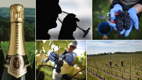 Composite of various wine photos