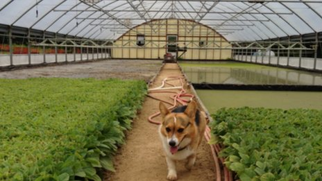 Greenhouse and dog