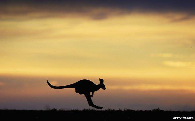 Silhouette of a kangaroo