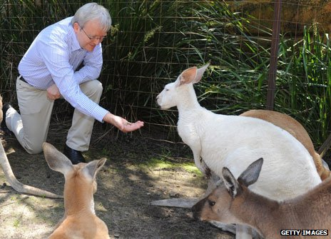 Kevin Rudd feeds kangaroo