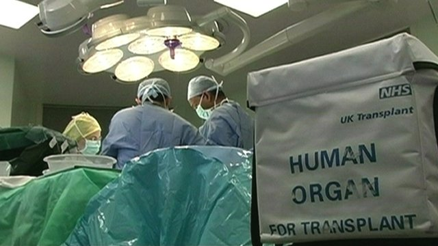 Human organ for transplant