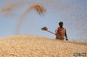 A labourer shovels wheat grain at a wholesale grain market on the outskirts of the northern Indian city of Amritsar May 13, 2013