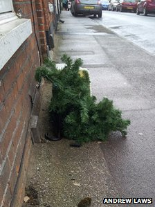 Christmas tree on a road in Ipswich