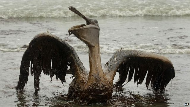 Bird covered in oil - file image