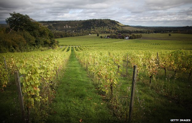 A landscape photo of the Denbies Wine Estate vineyard