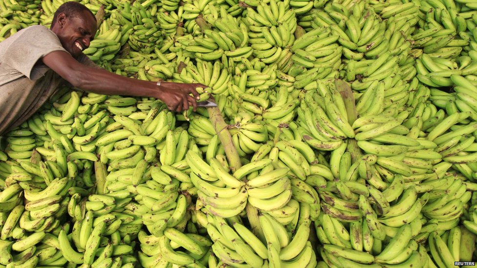 Banana market stall in Mogadishu, Somalia - Monday 8 July 2013