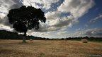 Oak tree on a farm landscape