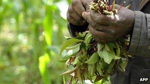 Khat farmer in Kenya - 2011