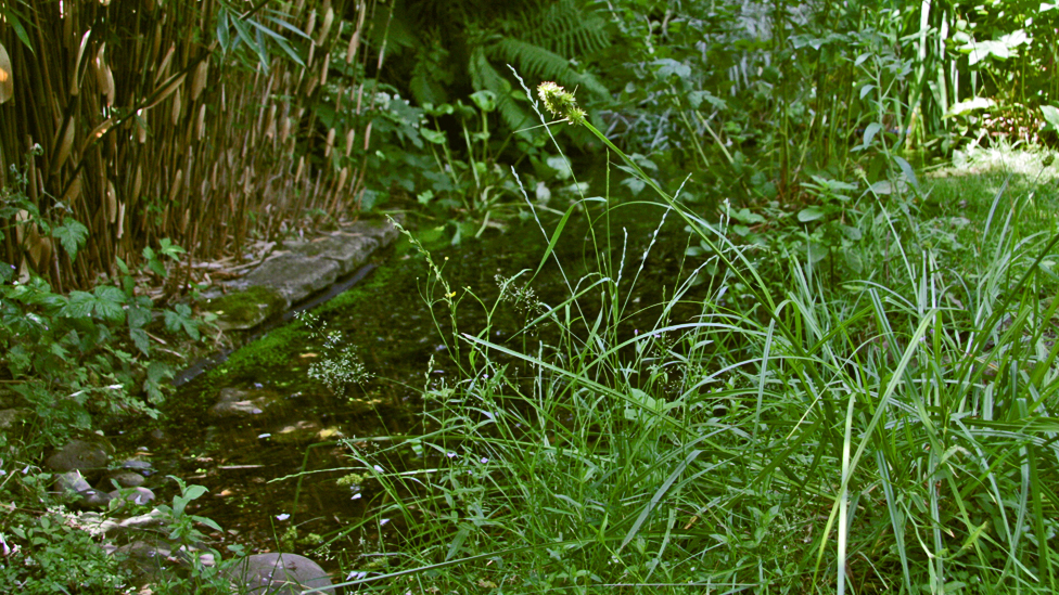 Creating a wildlife garden how to create a wildlife for Pond friendly plants
