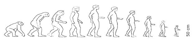 Evolution to the shrinking man