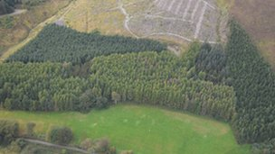 Aerial surveys by the Forestry Commission in 2011 showed the affected areas