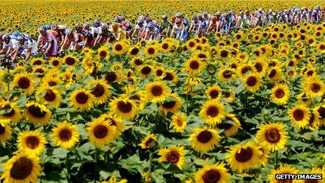 _68782246_sunflowers_getty.jpg