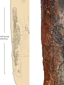 Composite image of a graphic image of the post's carving and a close up