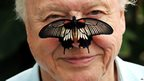 Sir David Attenborough with a Great Mormon Butterfly on his nose.