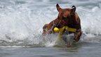 Dog at beach