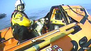 The cross terrier dog helped to safety by the RNLI