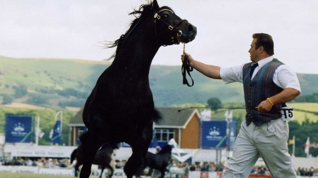 Horse being shown in 1995