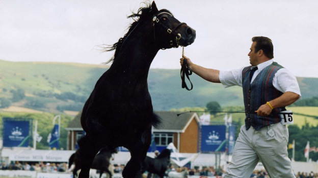 Horse being shown at the Royal Welsh Agricultural Show 1995
