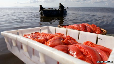 Russian salmon roe producers working at sea in 2006