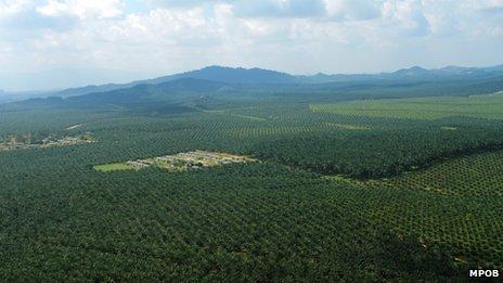 Malaysia palm oil plantations