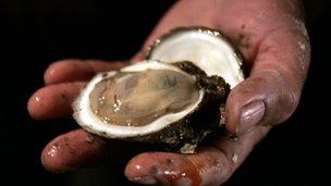 An oyster