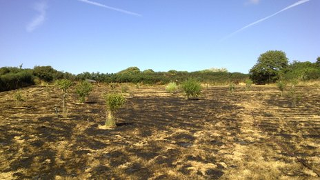 A burnt field in St Pierre du Bois