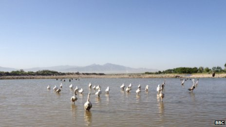 Birds in northern Afghanistan