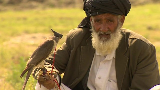 Bird hunters 'emptying Afghan skies'