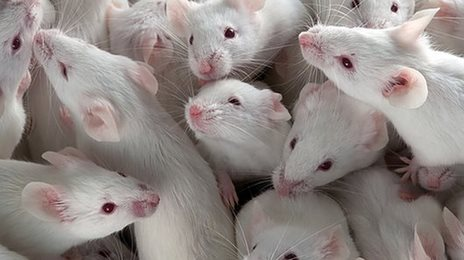 Pill linked to long life in mice