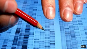 DNA profiles being analysed by a researcher