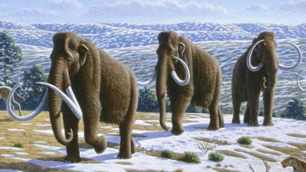 Woolly mammoths artwork