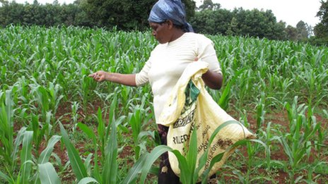 Mary Kisioro in field in Eldoret, Kenya