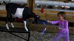 A girl encourages a goat across and obstacle course at the Cattaraugus County Fair in Little Valley, New York.