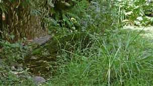 Chris Goodall's garden pond
