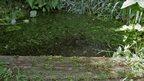 Edge of a garden pond